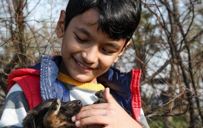 Beinahe weggeschnappt - Junge streichelt Hundewelpen