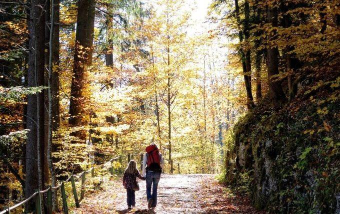Wenn die Wut kommt - Spaziergang im Wald