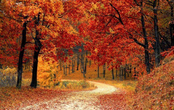 Mit dem Herbst spielen - Wald