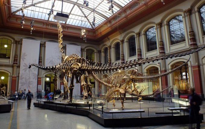 Besuch im Naturkundemuseum Berlin - Dinosaurier Skelette