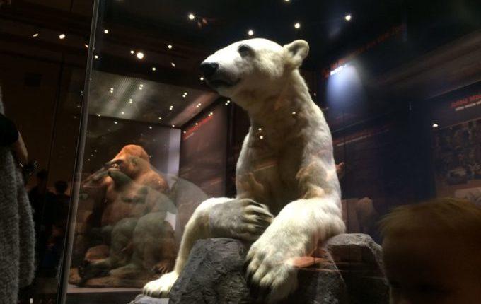 Besuch im Naturkundemuseum Berlin - Eisbär und Gorilla