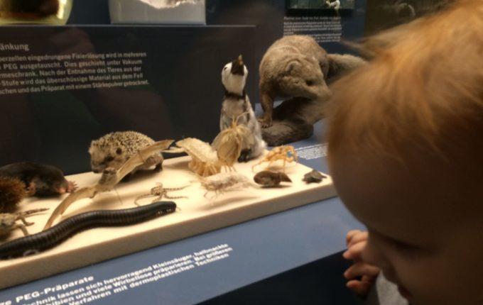 Besuch im Naturkundemuseum Berlin - Tierpräparate