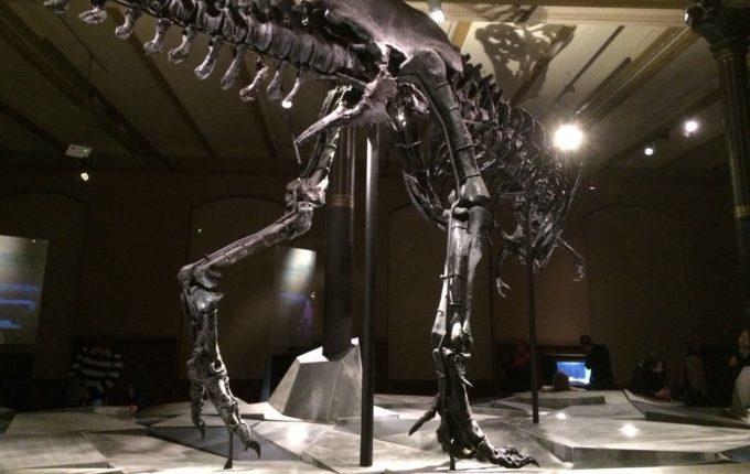 Besuch im Naturkundemuseum Berlin - Tristan - Tyrannosaurus Rex