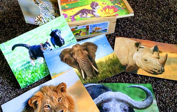 Tierbox mit Tierfotos