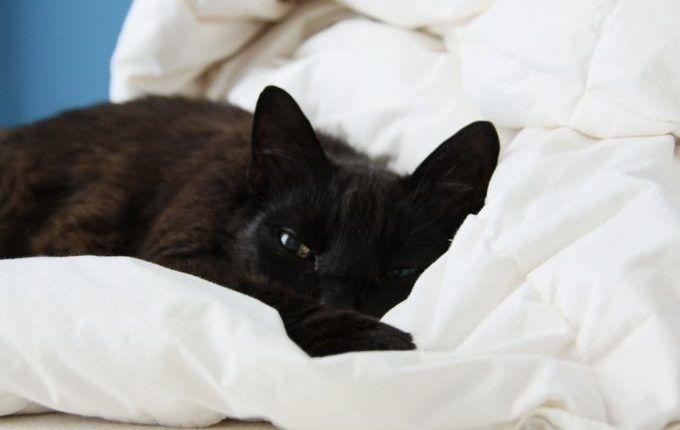 1. Mal Einschlafen ohne Brust - Müde Katze im Bett