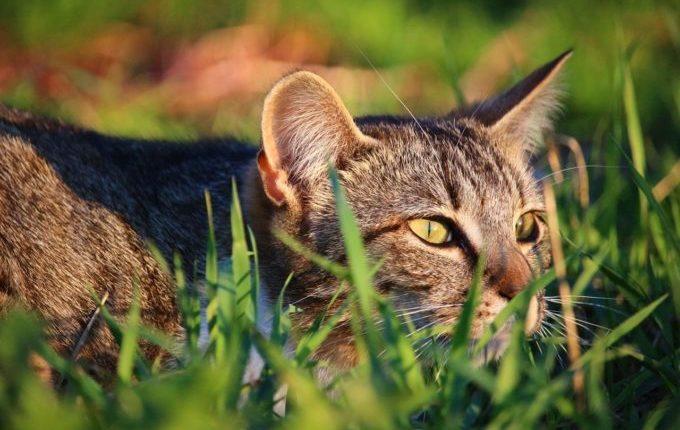 Kuscheltier verloren - Katze auf der Lauer