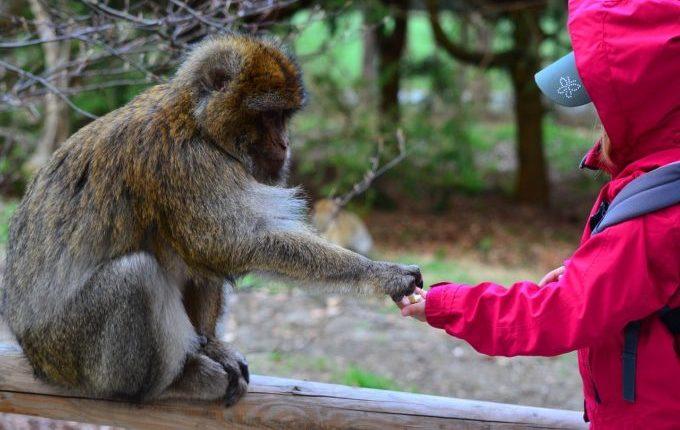 Kuscheltier verloren - Kind gibt Affe Futter