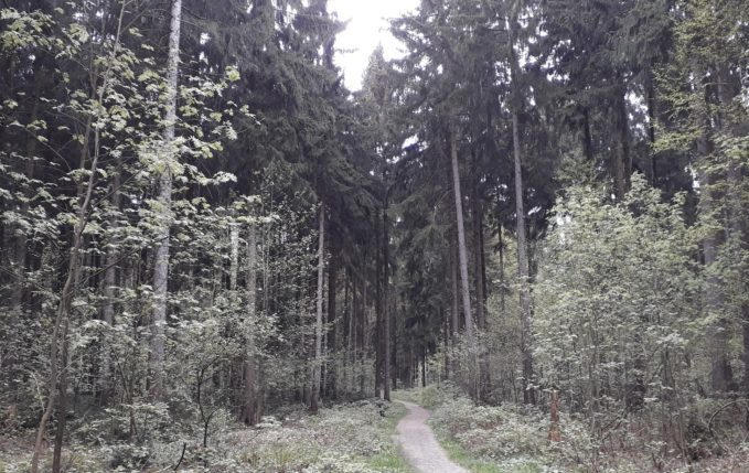 12 von 12 - Mai 2017 - hohe Bäume im Wald