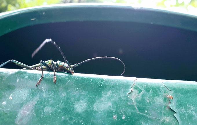 Insekt auf Mülleimer