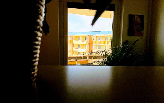 Tauben auf dem Balkon